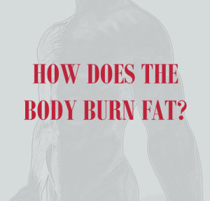 how does the body burn fat